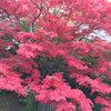 【イベントレポート】秋の紅葉日帰りバスツアー(11/7)-サムネイル