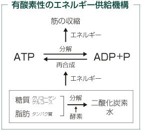 kenko_20110729.jpg