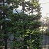リバティ植栽紹介④-サムネイル