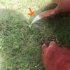 毎月の芝生の手入れ-サムネイル