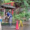 「自由ヶ丘熊野神社」参道洗浄-サムネイル