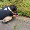 除草剤散布なしの手抜き作業-サムネイル