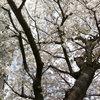 さくら咲く-サムネイル