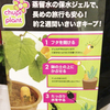 今週のお花(8/2)「chupi plant」-サムネイル