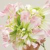 おもしろ植物シリーズNO.2「クレイジーテッシノ」-サムネイル