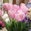 今日のお花「ピンクダイヤモンド」-サムネイル