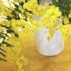 今週のお花「ミモザ」-サムネイル