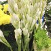 今週のお花:チューベローズ(7/25)-サムネイル