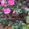 路傍の花-サムネイル