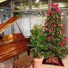 クリスマス装飾②-サムネイル