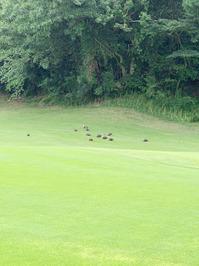 Golf_Blog_2020073103.jpg