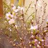 桜で早春の彩りを【今週のフラワーショップ】-サムネイル