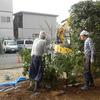 【レポート】樹木の植え替え(2/28)-サムネイル