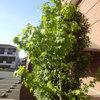 【レポート】樹木の成長!-サムネイル