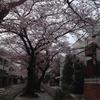3年ぶりの桜&祝3周年-サムネイル