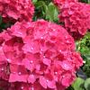 お花の精油-サムネイル