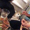 今日の1本! Vol-15~YARDEN 2010~-サムネイル