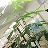 LHVの風景Vol-31 オフィス・ジャングル化計画 ②-サムネイル