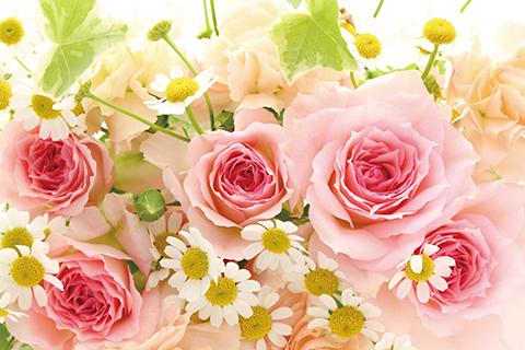 Flower_20170205.jpg